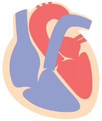 心臓はポンプ