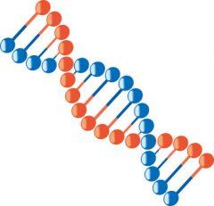 遺伝的な要因