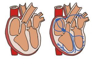 心臓の電気経路